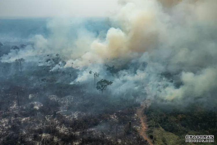 捐款保护亚马孙雨林,苹果为大自然做的还挺多的